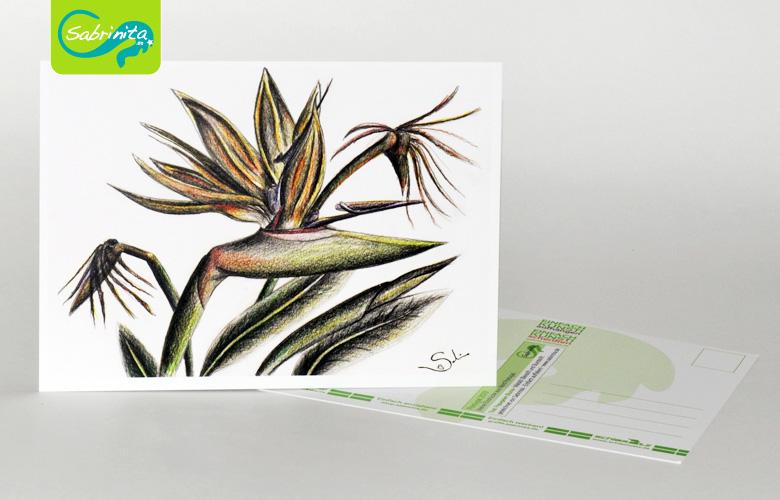 Postkarte A6 – Kunstdruck: Die Papageienblume