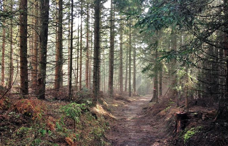 Durch den Wald – Abstieg Obdach Finale Panoramaweg Südalpen