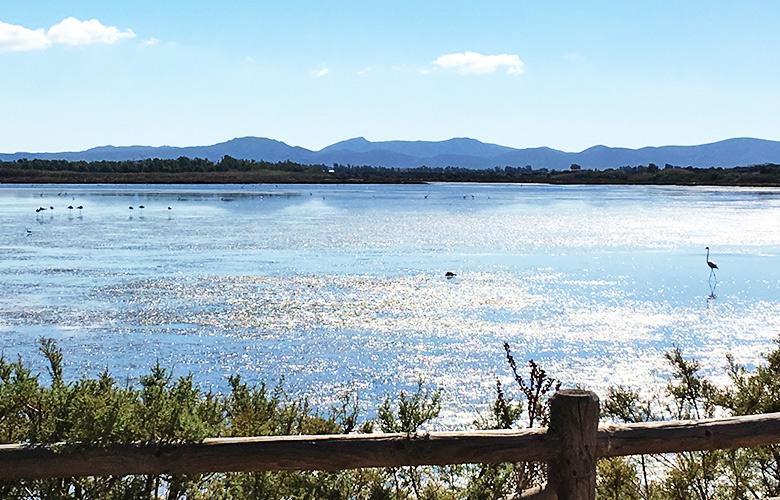 Flamingos Is Solinas Sardinien