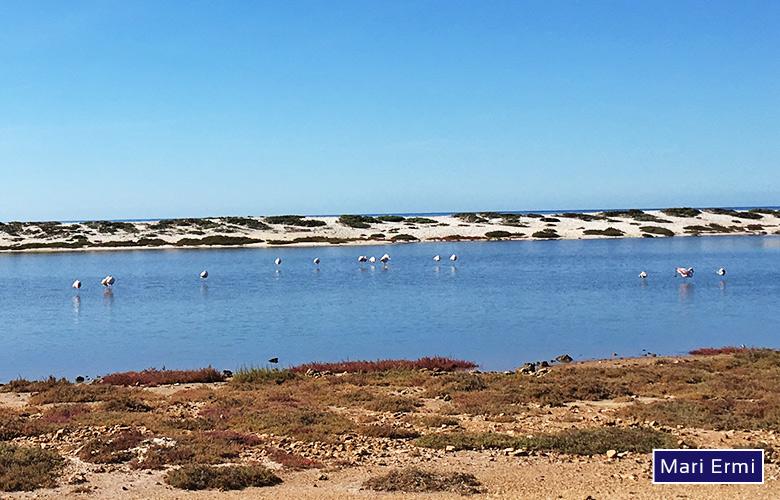 Flamingos in Mari Ermi auf Sardinien