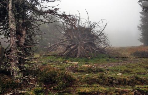 Die Krake im Wald – Etappe 16 Panoramaweg Südalpen