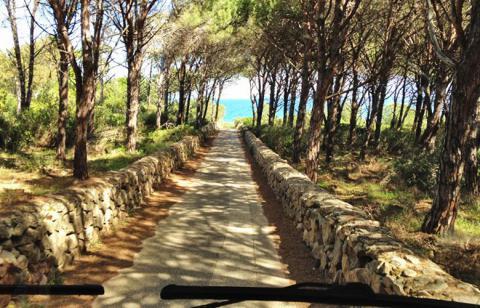 Zufahrt nach Marina delle Rose durch den Pinienwald